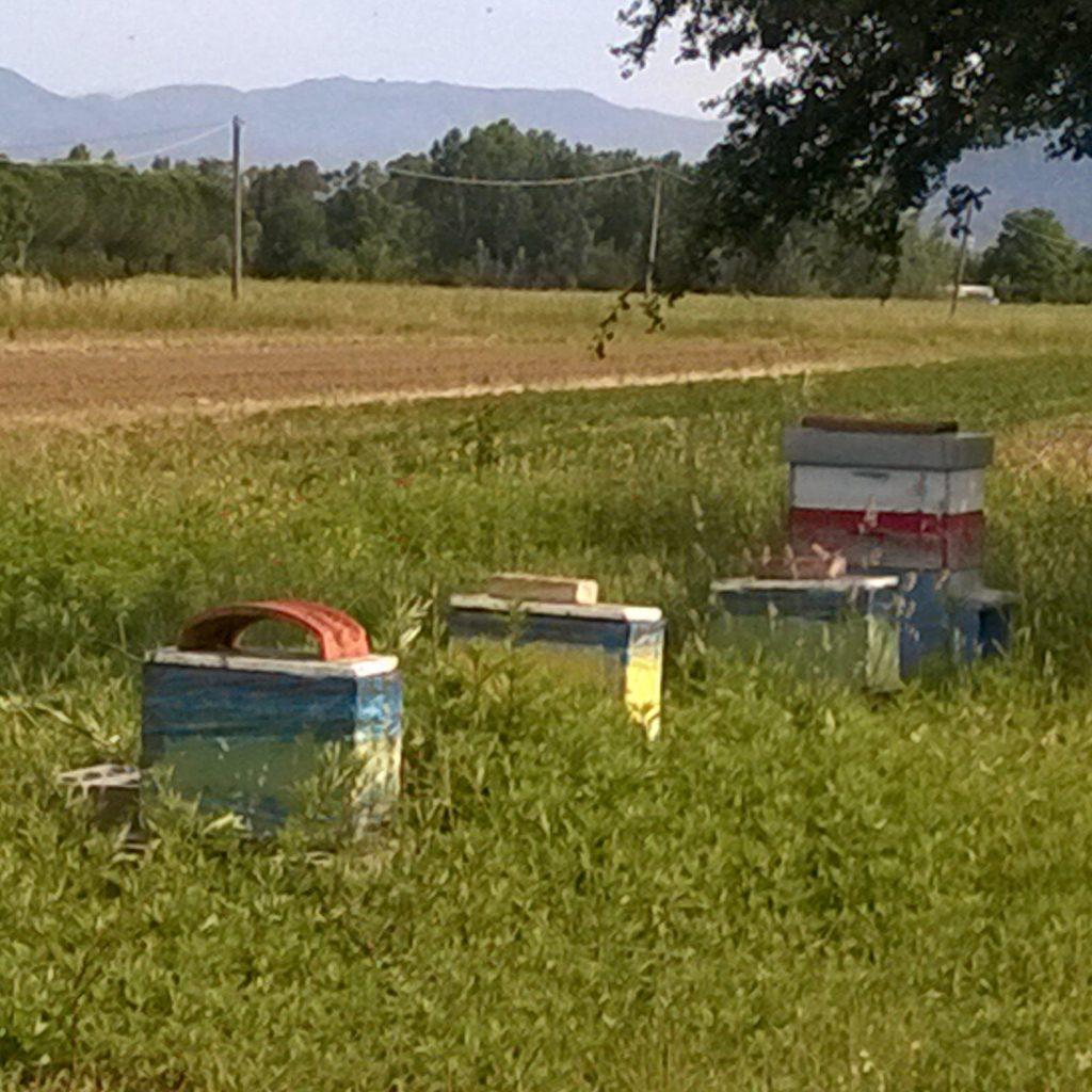 bottegheria miele la fattoria le prata